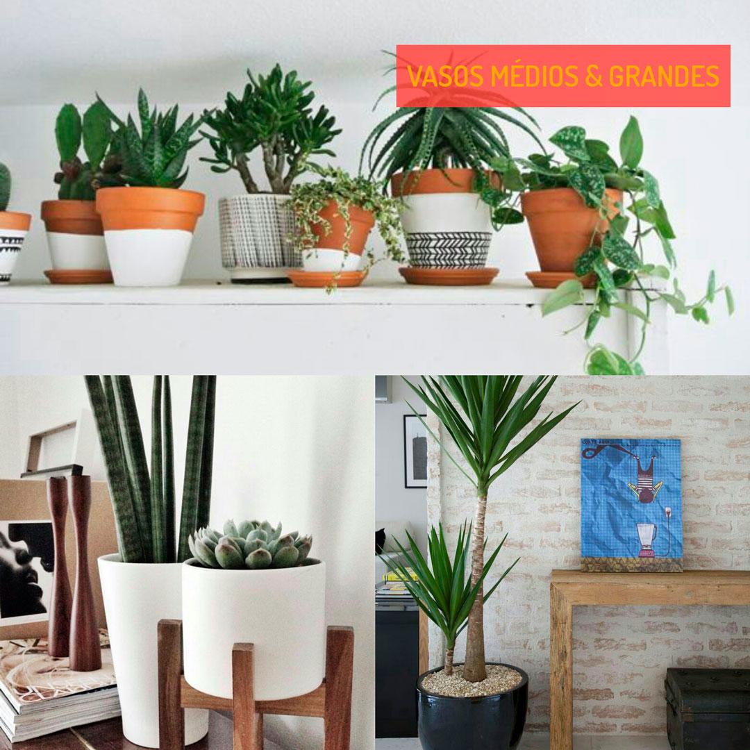 vasos-medios-grandes-planta-na-decoracao-grandes-inspiracao-um-cafe-pra-dois
